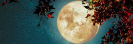 Que voir dans le ciel nocturne en novembre?
