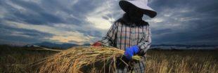 Monsanto aurait créé des groupes d' 'agriculteurs fantômes' pour défendre le glyphosate