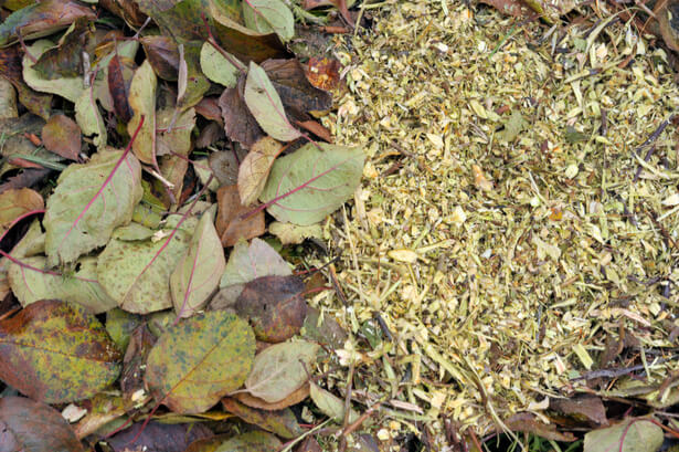 terreau feuilles mortes