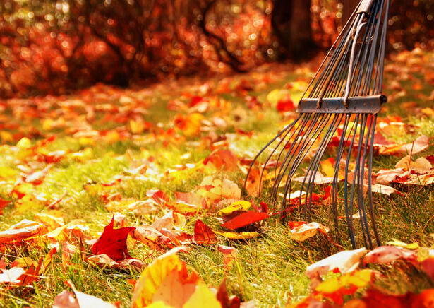 souffleur feuilles mortes