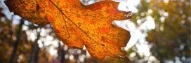 Automne au jardin: faire un terreau de feuilles mortes