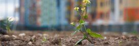 Les friches urbaines sont aussi porteuses de biodiversité