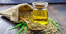 L'huile de chanvre, une précieuse alliée pour la peau et les cheveux