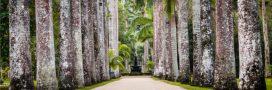 Coup de coeur: de fabuleux jardins botaniques [diaporama]