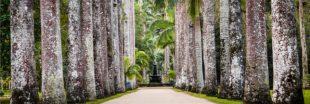 Coup de coeur : de fabuleux jardins botaniques [diaporama]