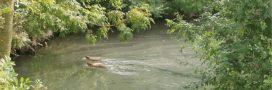 Les zones humides disparaissent (vraiment) rapidement