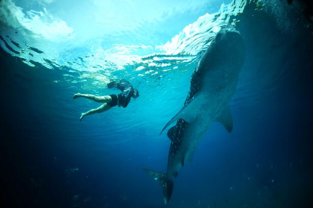 nager dauphins cétacés