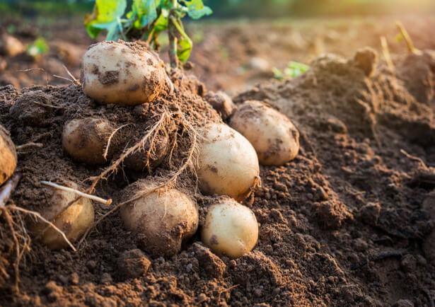 agriculture du vivant