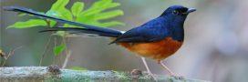 Silent Forest: les zoos d'Europe continuent à venir en aide aux oiseaux chanteurs