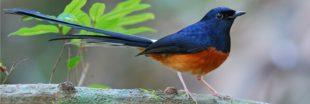 Silent Forest : les zoos d'Europe continuent à venir en aide aux oiseaux chanteurs
