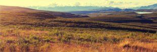 L'Arctique se couvre de végétation à un rythme aussi rapide qu'inattendu...