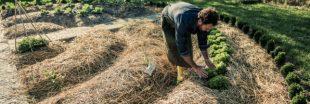 Permaculture d'automne: la butte de culture en lasagnes