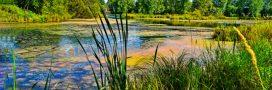 Comprendre la biodiversité – Vie et mort d'une mare naturelle