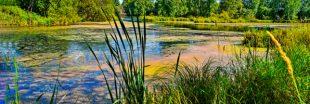 Comprendre la biodiversité - Vie et mort d'une mare naturelle