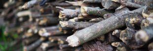 Pierres et bois pour un potager sans ravageurs et plein de vie