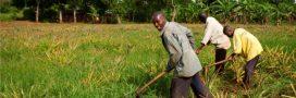 Les agricultures familiales, une solution pour lutter contre la faim?