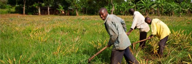 Les agricultures familiales, une solution pour lutter contre la faim ?
