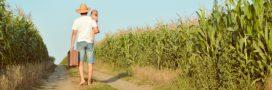 Aides à la bio non payées aux producteurs: le défenseur des droits saisi