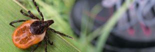 Contre la maladie de Lyme, participez vous-aussi à la Tiquothèque CiTIQUE !