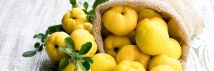 Le coing: un fruit d'automne riche en minéraux et en vitamines