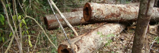 Le Brésil renonce à organiser la COP25, la déforestation se poursuit