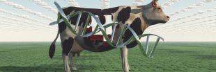 Un OGM interdit retrouvé dans la nourriture d'élevage