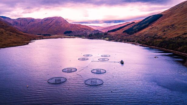 saumon ecosse