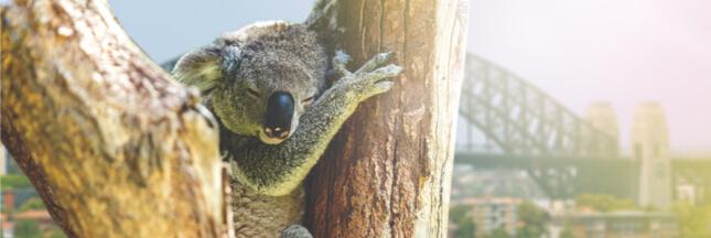 70% de la vie sauvage se répartit dans seulement cinq pays sur Terre !