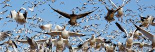 Biomasse terrestre : les virus pèsent 3 fois plus que les humains !