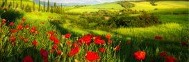 Une Europe agroécologique pour 2050?