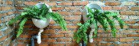 Il fait pousser des salades à partir de ses cheveux et de son urine