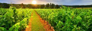 Le palmarès des départements champions des pesticides