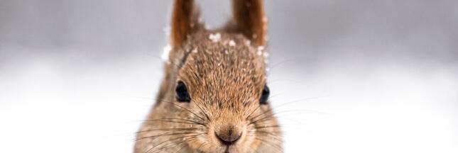10 animaux à observer cet hiver