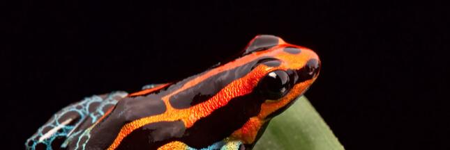 Vendre le nom des animaux nouvellement découverts pour sauvegarder l'environnement?