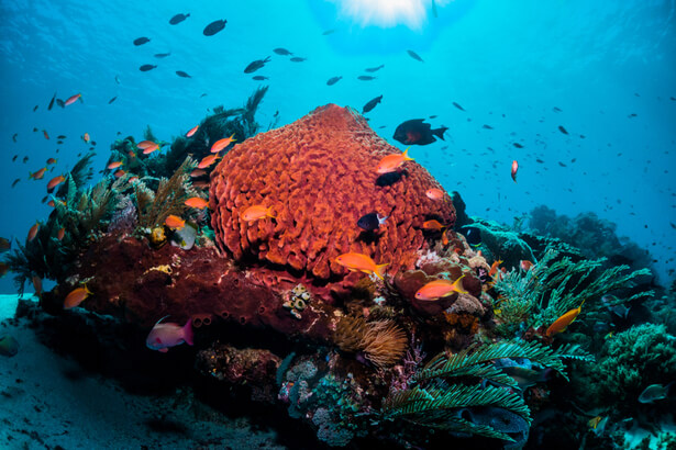 COP14 biodiversité