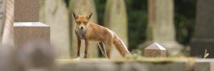 Biodiversité urbaine : ces animaux qui se sont habitués vivre en ville