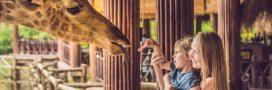 Zoo de Mulhouse: 150 ans et pas une ride! – Interview de son directeur
