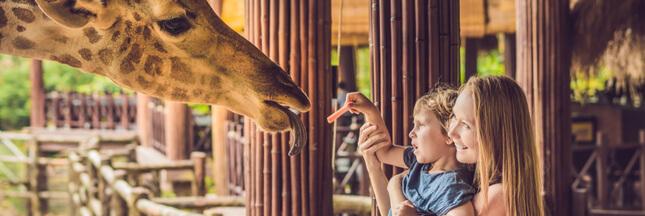 Zoo de Mulhouse : 150 ans et pas une ride ! - Interview de son directeur