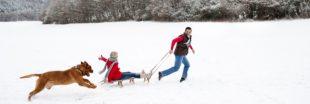 Des activités nature pour les vacances d'hiver