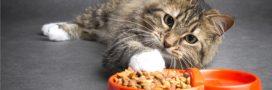 Pourquoi un chat stérilisé a-t-il besoin d'une alimentation spécifique?