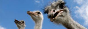 COP14 : Et si on parlait aussi de biodiversité ?