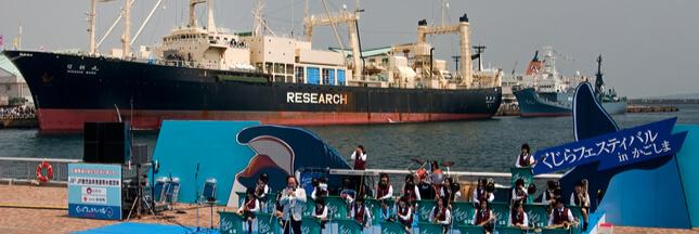 Mauvaise nouvelle pour les baleines : le Japon quitte la CBI, la chasse commerciale va reprendre !