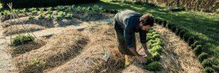 Permaculture d'automne : la butte de culture en lasagnes