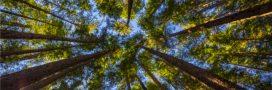 GEDI: le nouvel outil laser pour cartographier la forêt en 3D