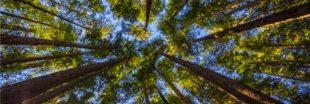 GEDI : le nouvel outil laser pour cartographier la forêt en 3D