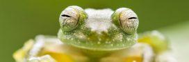 Les 10 plus belles photos du concours 'Capturing Ecology'