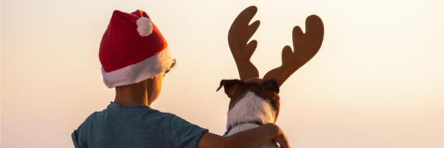 Comment passer un Noël respectueux des animaux ?