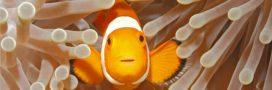 Vie en société chez les animaux: 5 faits qui nous fascinent