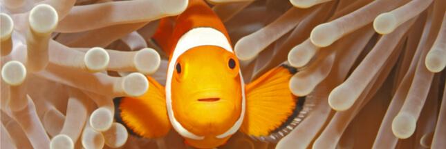 Vie en société chez les animaux : 5 faits qui nous fascinent