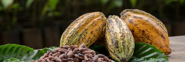Plantations de cacao: malgré les promesses, la déforestation continue en Afrique